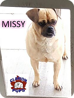 Pug/Beagle Mix Dog for adoption in Strattanville, Pennsylvania - MISSY