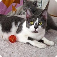 Adopt A Pet :: Juna - Fort Wayne, IN