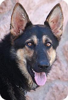 German Shepherd Dog Mix Dog for adoption in Los Angeles, California - Riley von Riegel