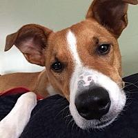 Adopt A Pet :: Marty - Groton, CT