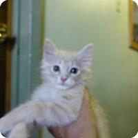 Adopt A Pet :: Blondie - Quincy, CA