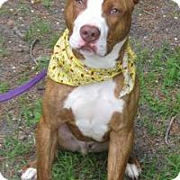 Adopt A Pet :: Colby - Voorhees, NJ