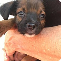 Adopt A Pet :: Mickey - Homestead, FL