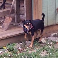 Adopt A Pet :: Dante - DAYTON, OH