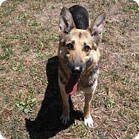 Adopt A Pet :: Zuko - Oakland, CA