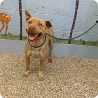 Adopt A Pet :: URGENT on 7/27 SAN BERNARDINO - San Bernardino, CA
