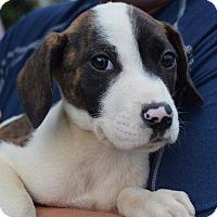Adopt A Pet :: NAOMI - East Windsor, CT