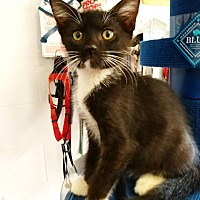 Adopt A Pet :: K - Umatilla, FL