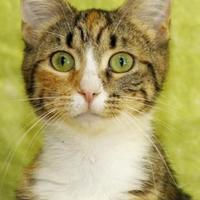 Adopt A Pet :: Emerald - Bristol, IN