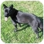 Photo 3 - Australian Cattle Dog/Labrador Retriever Mix Dog for adoption in Cincinnati, Ohio - Cole
