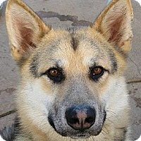 Adopt A Pet :: Jeb - Oakley, CA