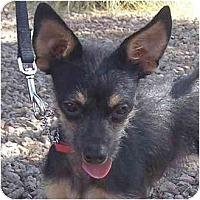Adopt A Pet :: Ringo - Las Vegas, NV
