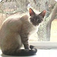 Adopt A Pet :: Neko - Port Republic, MD