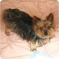 Adopt A Pet :: Mandy - Charlotte, NC