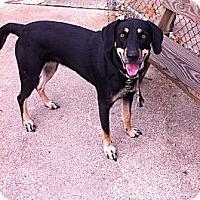 Adopt A Pet :: Georgia - Peru, IN