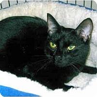 Adopt A Pet :: Minnie - Medway, MA