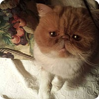 Adopt A Pet :: Lady Cartier - Columbus, OH