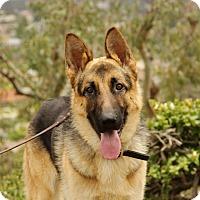 Adopt A Pet :: Grant - Laguna Niguel, CA