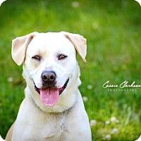 Adopt A Pet :: Apollo - ADOPTED! - Zanesville, OH