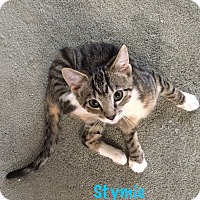 Adopt A Pet :: Stymie - Jackson, NJ