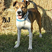 Terrier (Unknown Type, Medium) Mix Dog for adoption in Lawrenceburg, Tennessee - AJ
