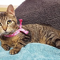 Adopt A Pet :: Jane - Lexington, MO