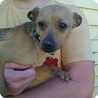 Adopt A Pet :: Kermit the Dog - Salamanca, NY