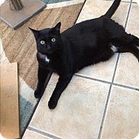Adopt A Pet :: PEPE - Hamilton, NJ