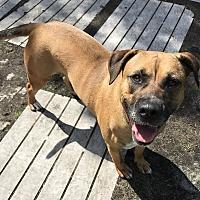 Adopt A Pet :: GiGi - Newport, NC