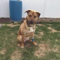 Adopt A Pet :: RJ - Saskatoon, SK