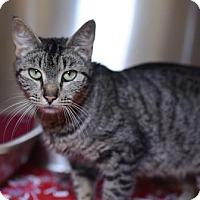 Adopt A Pet :: Jasmine - Gulfport, MS