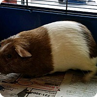 Adopt A Pet :: Delilah - Lancaster, PA