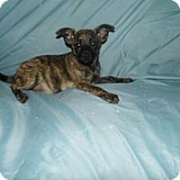 Adopt A Pet :: Jasmine - Jarrettsville, MD