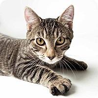 Adopt A Pet :: Spiedy - Rockaway, NJ