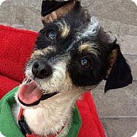 Adopt A Pet :: Angie - La Habra Heights, CA