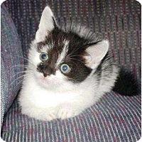 Adopt A Pet :: Smudge - Kirkwood, DE