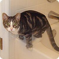 Adopt A Pet :: Woodrow - Kensington, MD