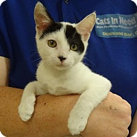 Adopt A Pet :: MICHAEL - Diamond Bar, CA