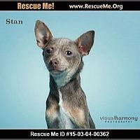 Adopt A Pet :: Stan - Phoenix, AZ