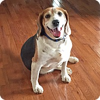 Adopt A Pet :: Thomas - Homewood, AL