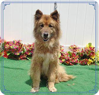 Collie/Shepherd (Unknown Type) Mix Dog for adoption in Marietta, Georgia - MAX