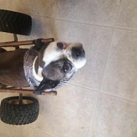 Adopt A Pet :: Skittles - Templeton, CA