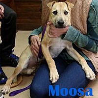 Adopt A Pet :: Moosa - Orangeburg, SC