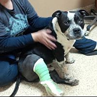 Adopt A Pet :: LUCIANO - Sacramento, CA