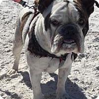 Adopt A Pet :: Rascal - Odessa, FL