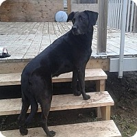 Adopt A Pet :: Hannah - Toronto, ON
