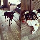 Adopt A Pet :: Wrangler