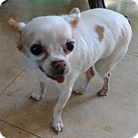 Adopt A Pet :: Mookie - San Diego, CA