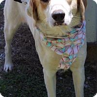 Adopt A Pet :: Nick - Minneapolis, MN