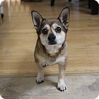 Adopt A Pet :: Pokey - San Francisco, CA